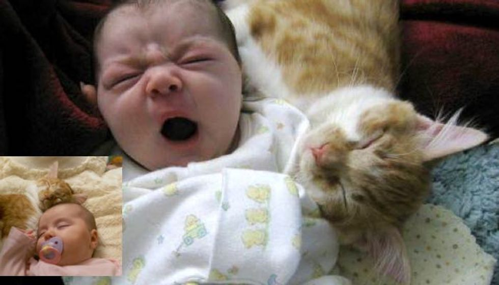 Ginger Cat and His Baby Sister Growing Up Together