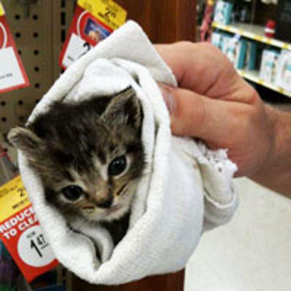 Little Rescue Burrito Kitty Taken in by PetSmart Staff