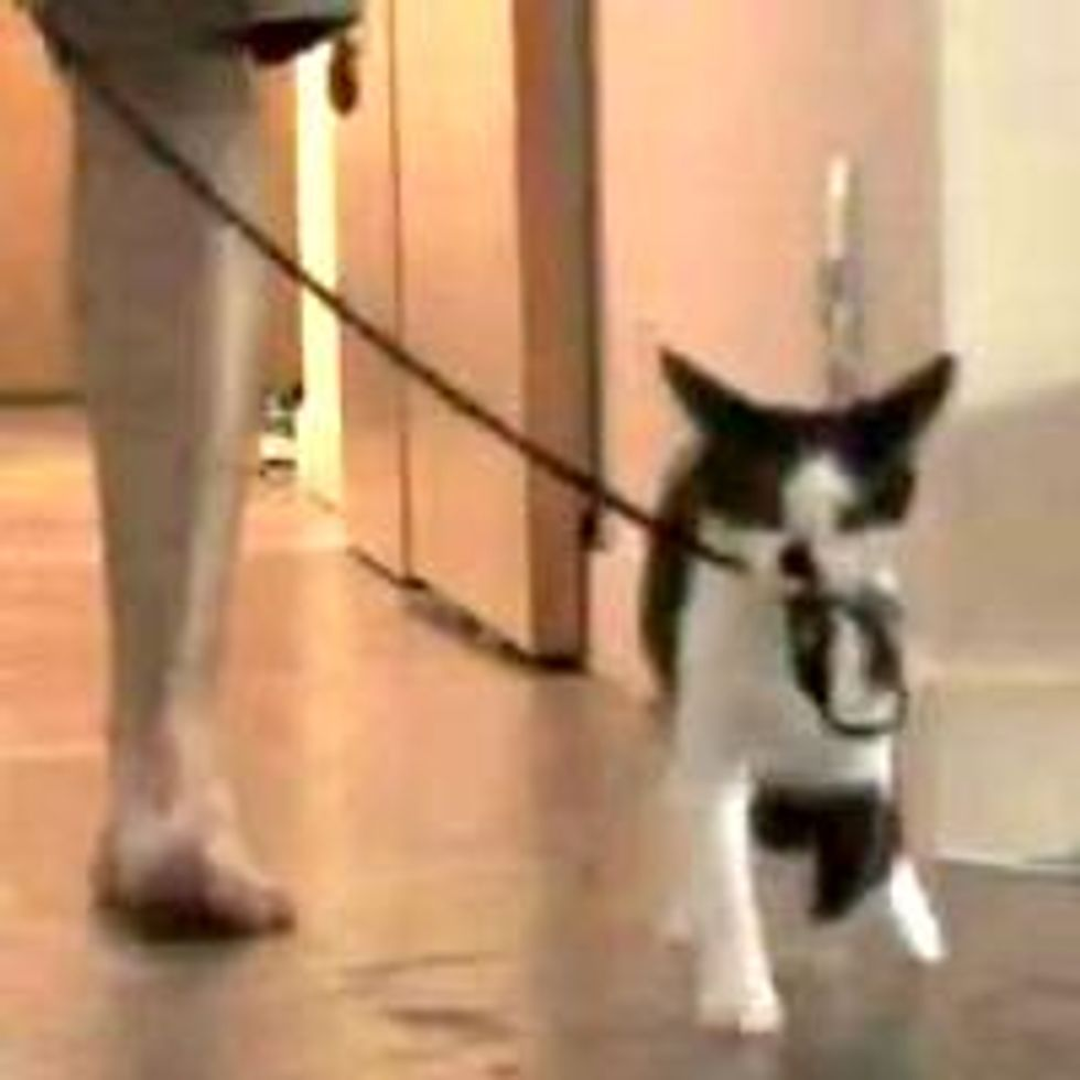 How to Walk Your Human!