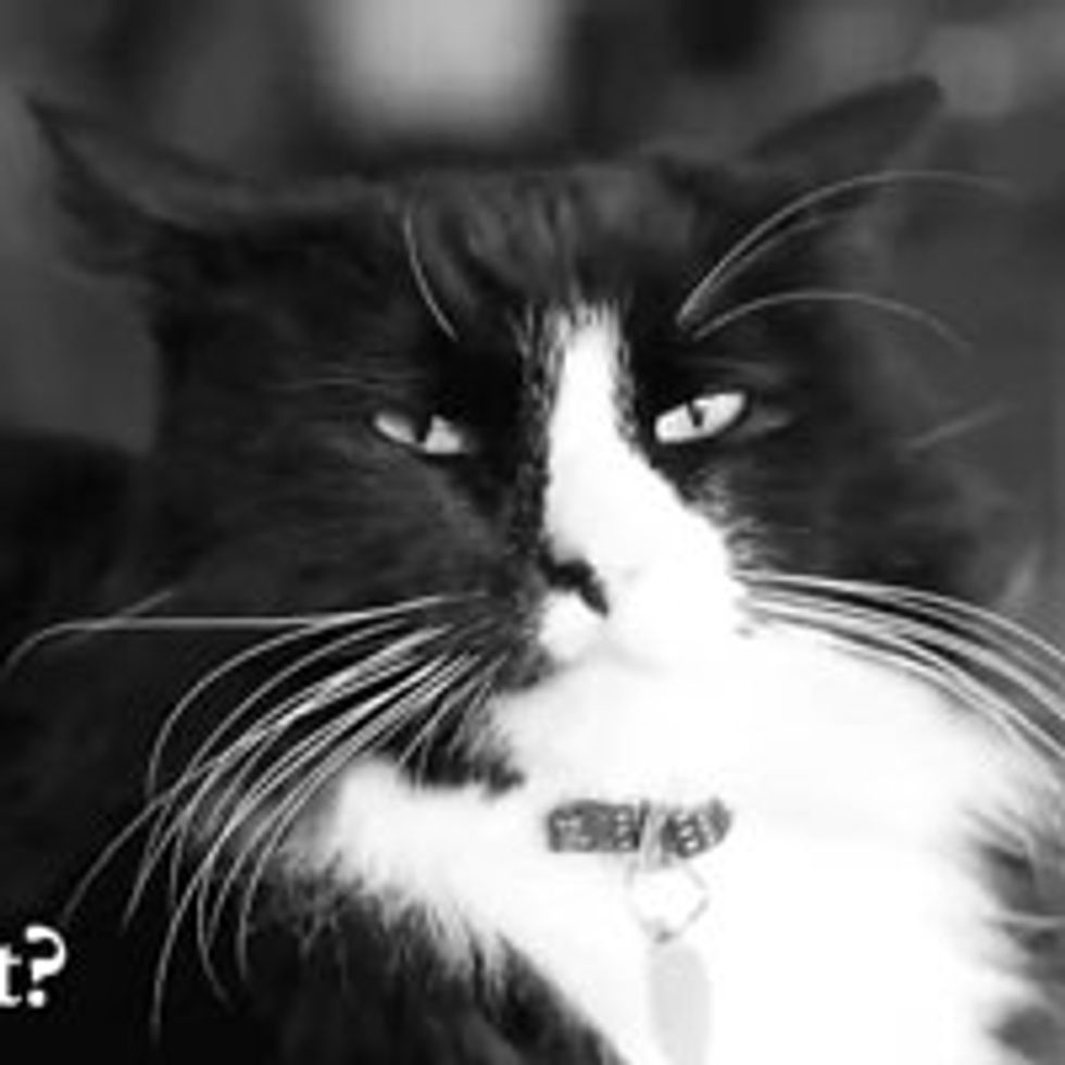 The Existentialist Despair of Henri the Cat