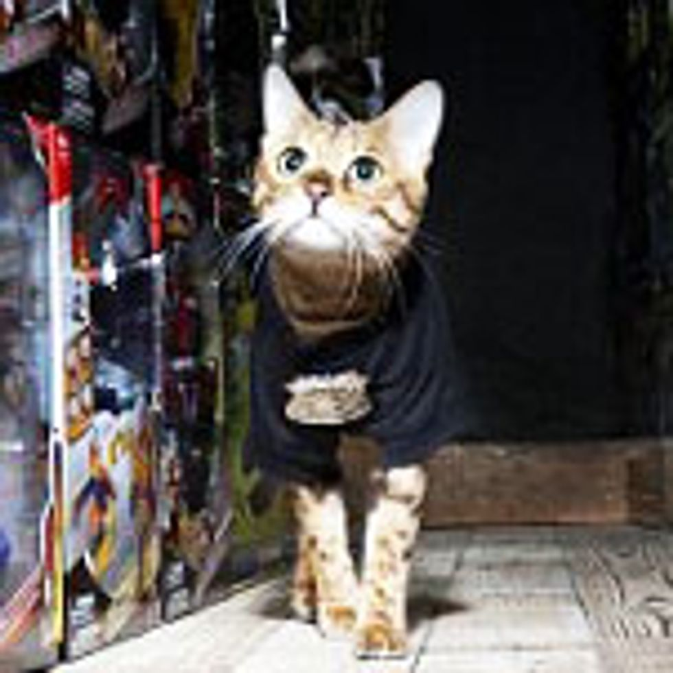 Bengal Cat Found Wandering at Toy Factory Becomes Security Guard