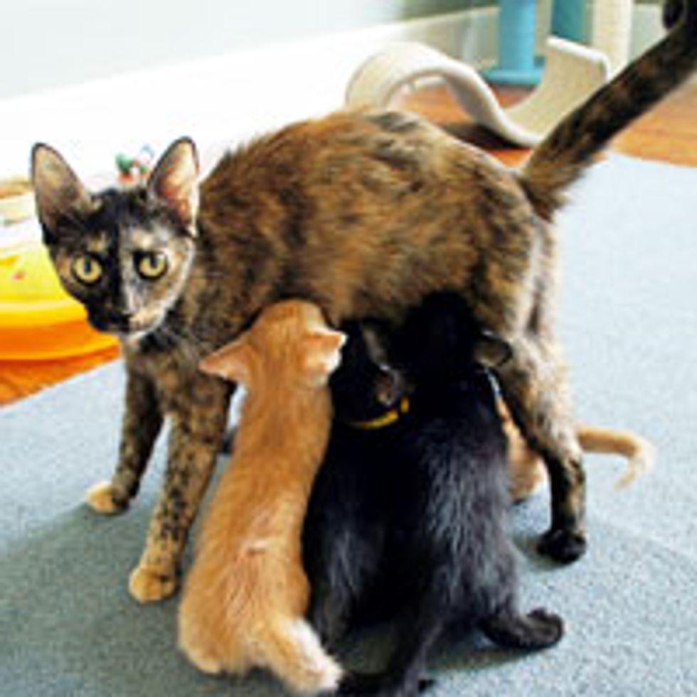 Abandoned Momcat Keeps Her Kittens Safe Until Rescue