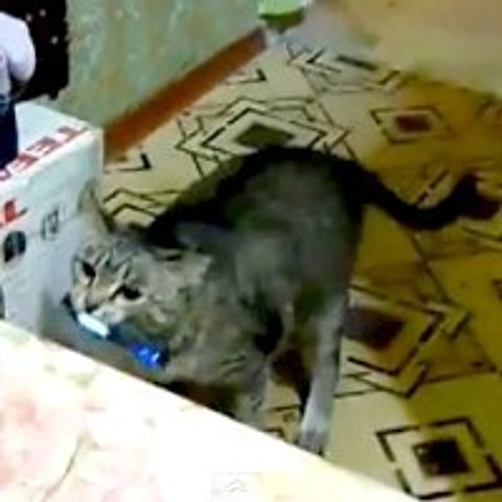 Kitty Fetches Phone When It Rings