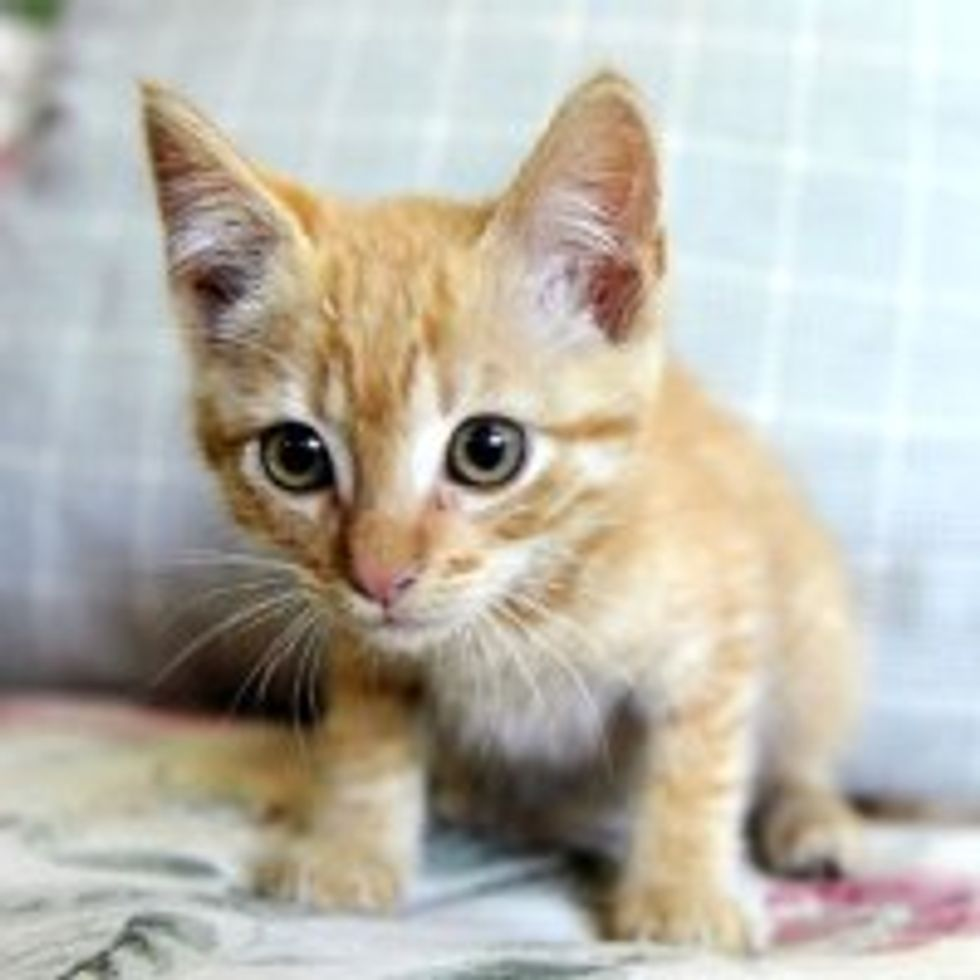 Eight Firefighters Rescue Ginger Kitten from 20-inch Storm Pipe