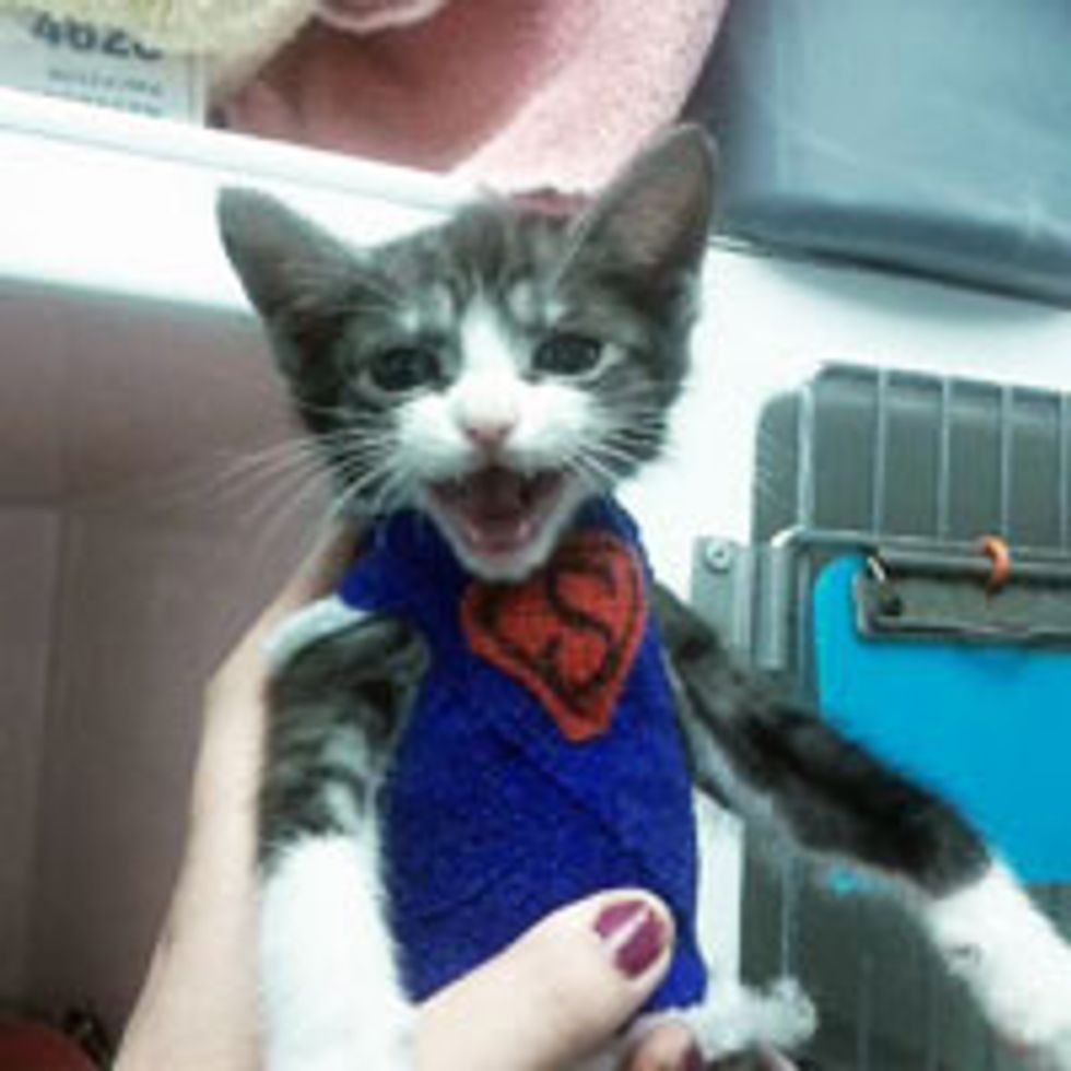 Kitty with Deformity Becomes Superkitten