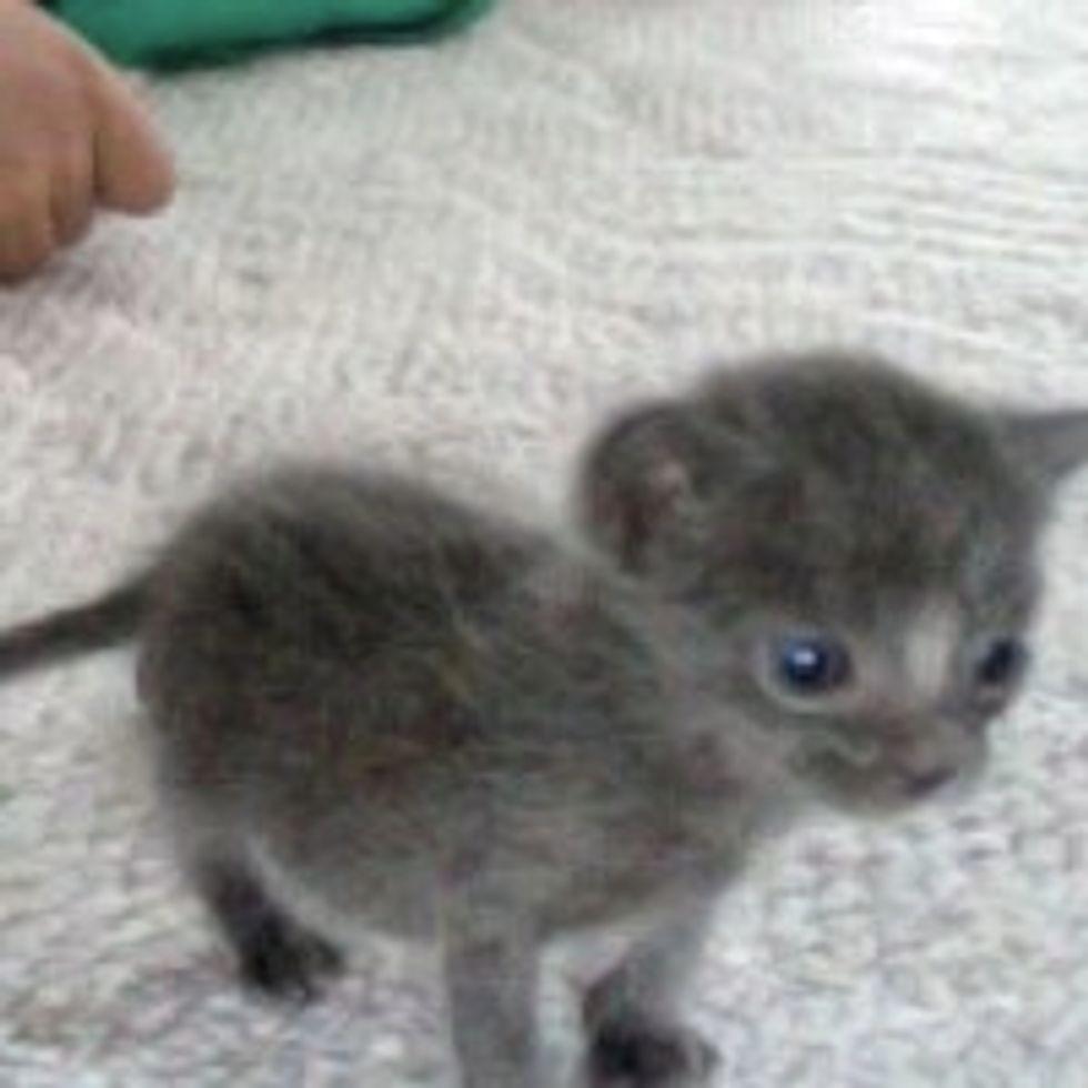 Teeny Farm Kitty, Little Survivor