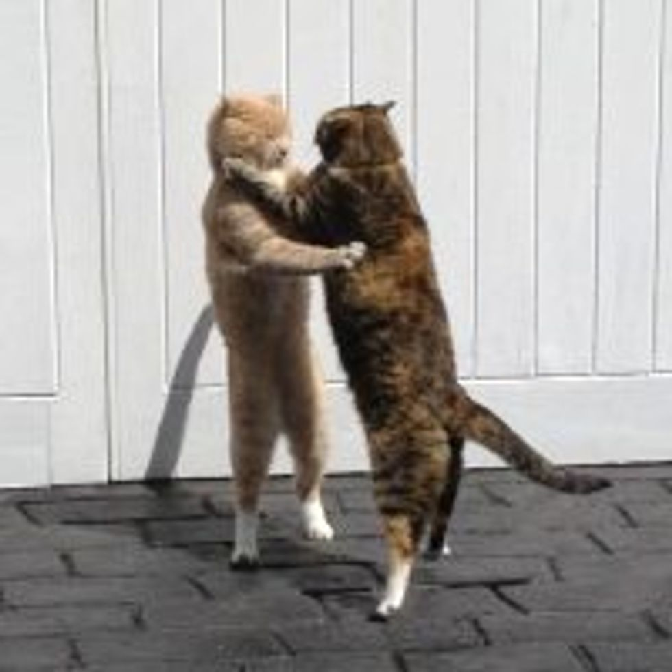 Cats Don't Fight, They Dance!