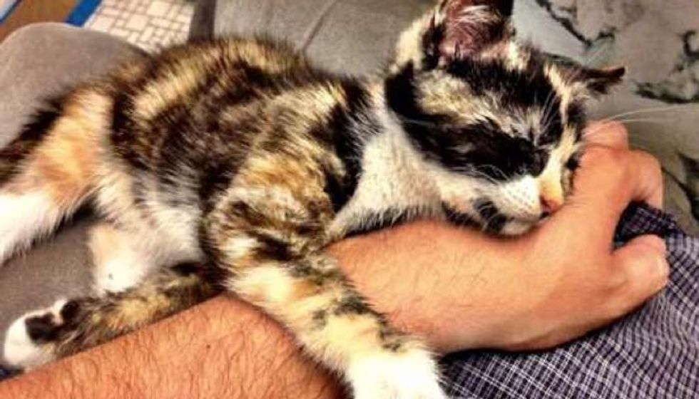 Saved by Stroke of Luck, Calico Kitten Rescued from Moving Mercedes