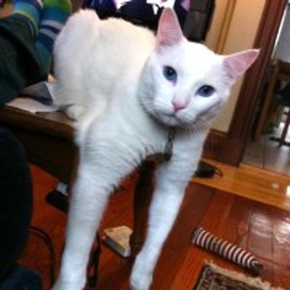 Vet Tech Adopts Deaf Cat Who was Unwanted