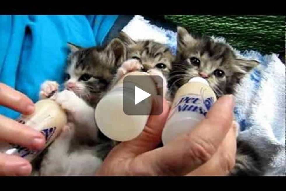 Itty Bitty Bottle Feeding Committee