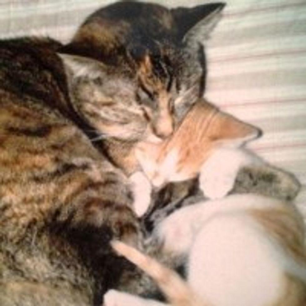 Kitty Finds Surrogate Cat Mama
