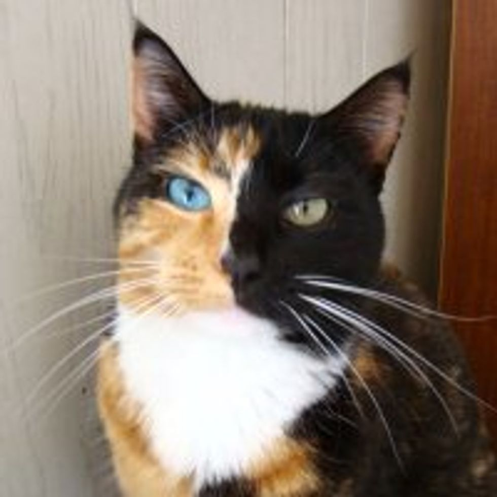 Whiskey Anne the Odd-eyed Two-Faced Rescue Stray