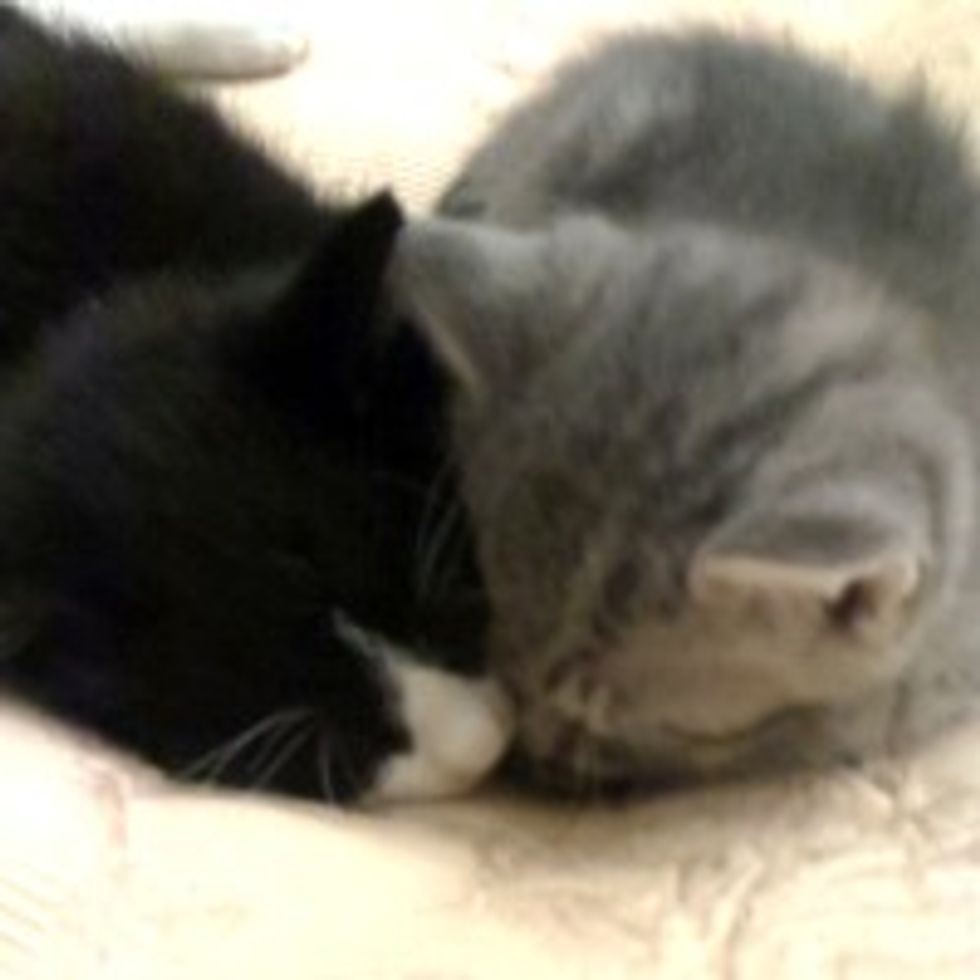 Stray Kittens Crept Their Way into the Heart of Person Who Rescued Them