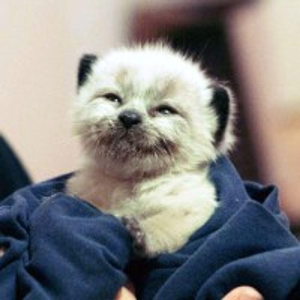 Happy Bottle Kitty Ollie