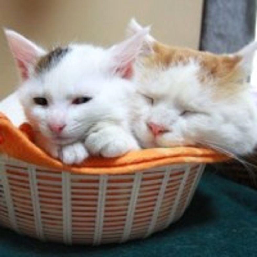 Shiro and Mimi: Sharing Basket