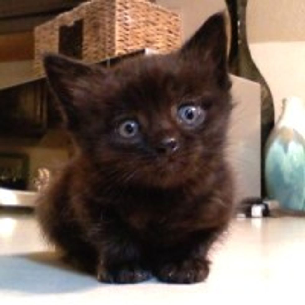 Tiny Kitty Saved from Freezing Cold and Brought Back to Life