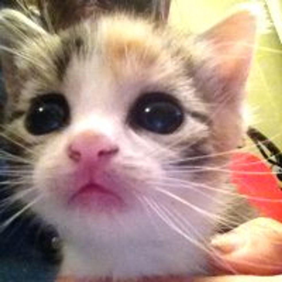 Meet Tiny Tigger