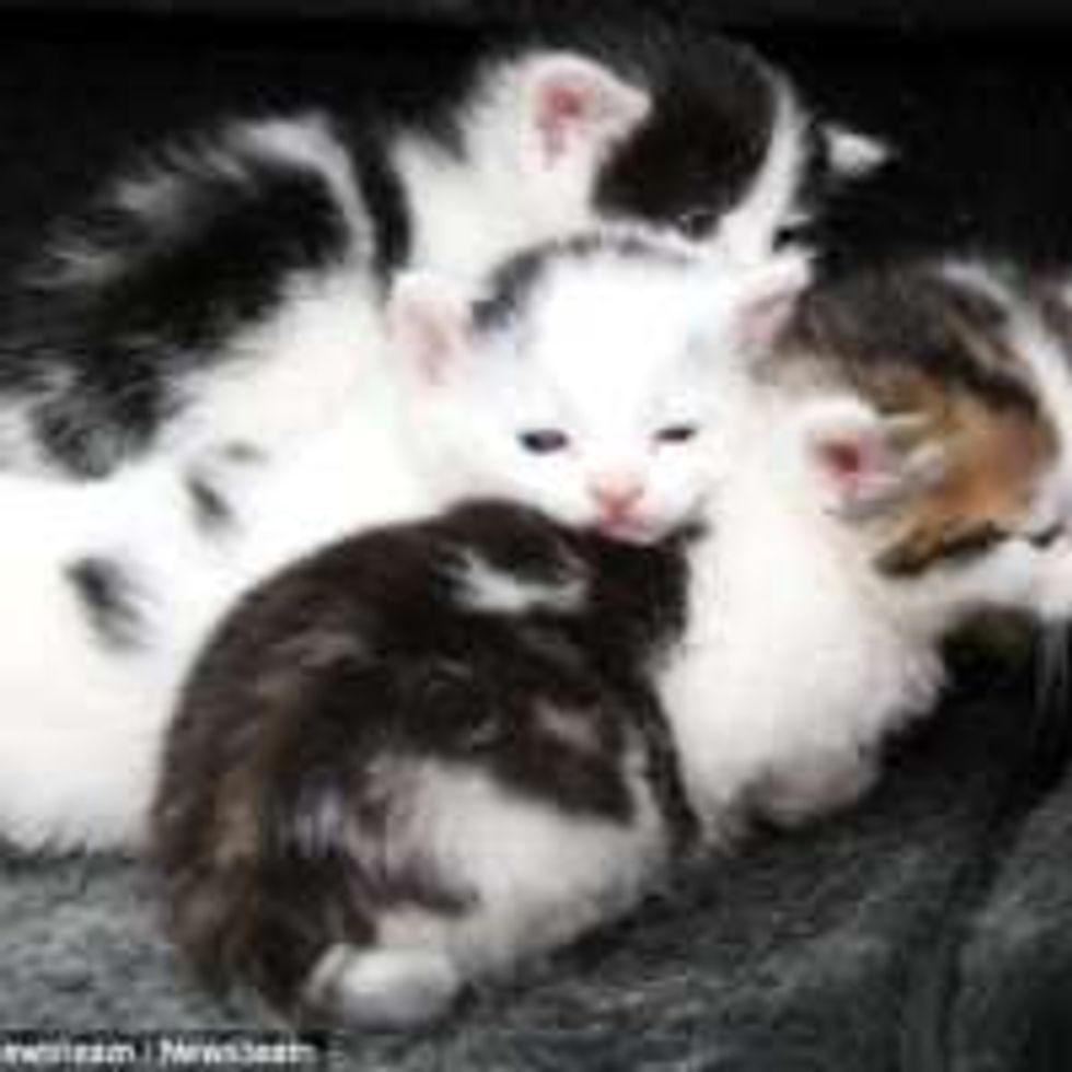 Four Kittens Saved by Mechanics with Seconds to Spare