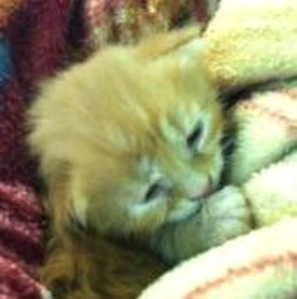 Kitten Survived Front Loader, Saved by Construction Crew