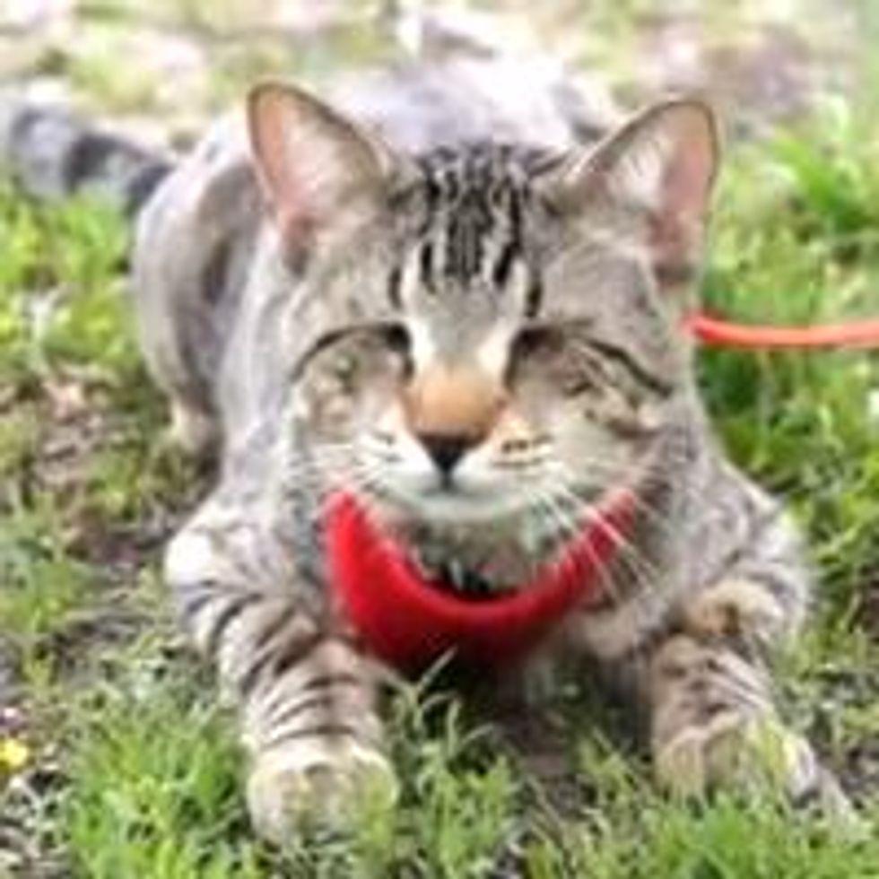 Oskar the Blind Cat - Mother Nature Reunion