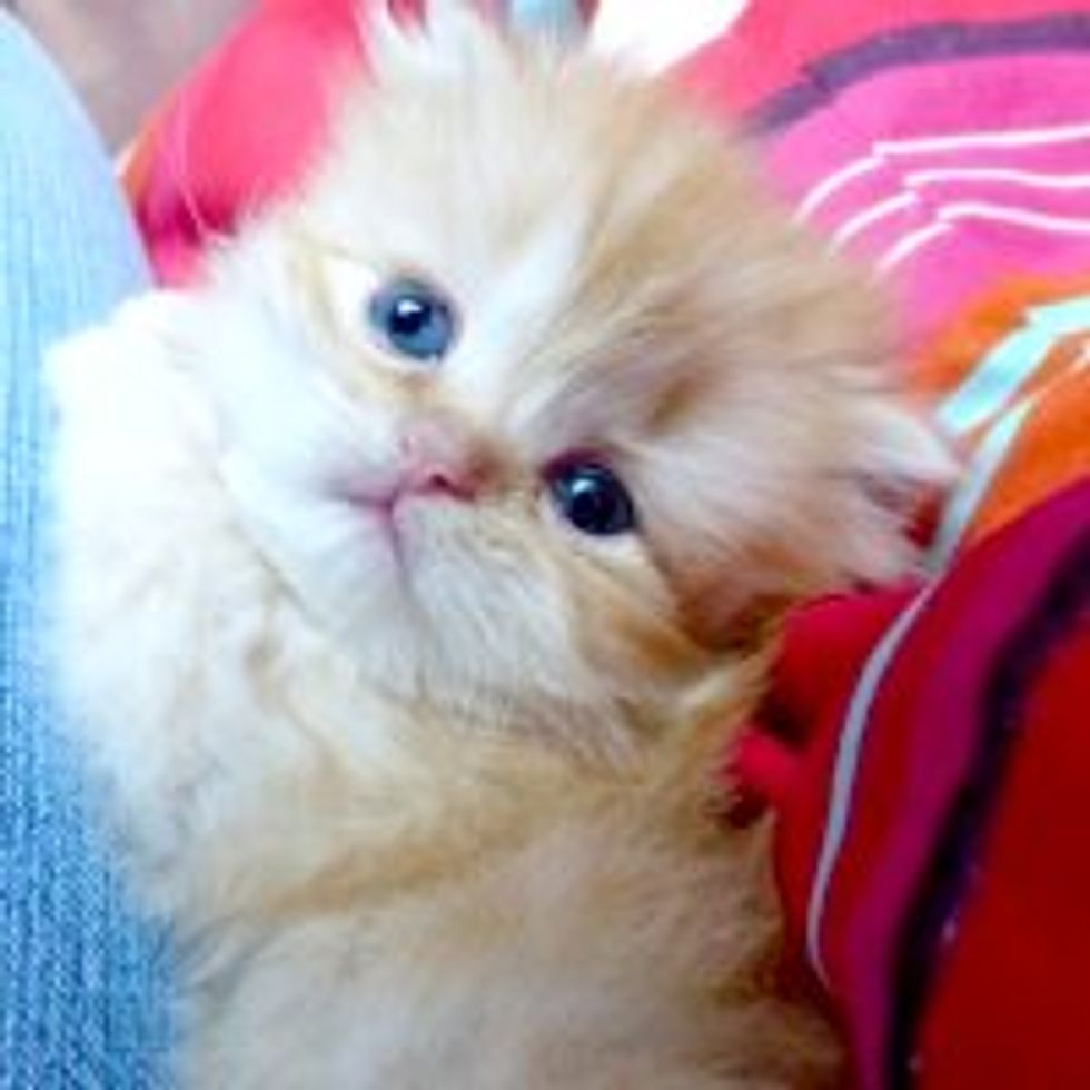 Little Furry Clinger