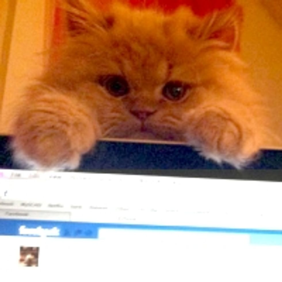 Kitty Demands Mom to Get off Facebook