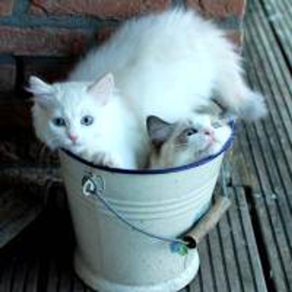 My Bucket!