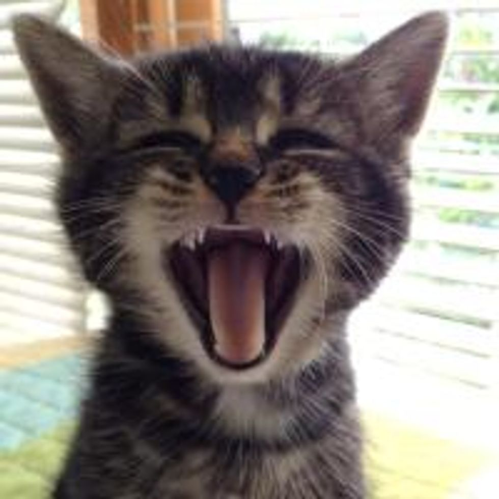 Caturday Meow!