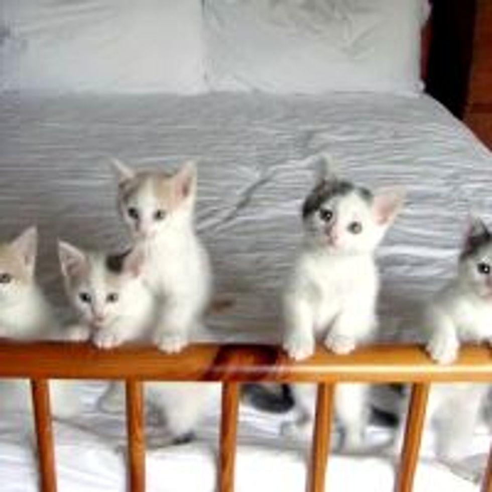 Litter of 7 Kitties Run Foster Home