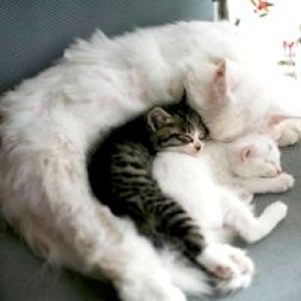 Protective Love