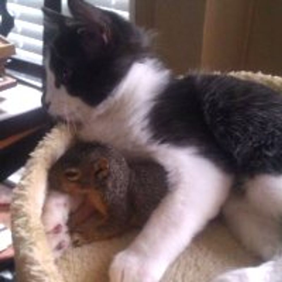 Squirrel Comes to Hang Out with Cat