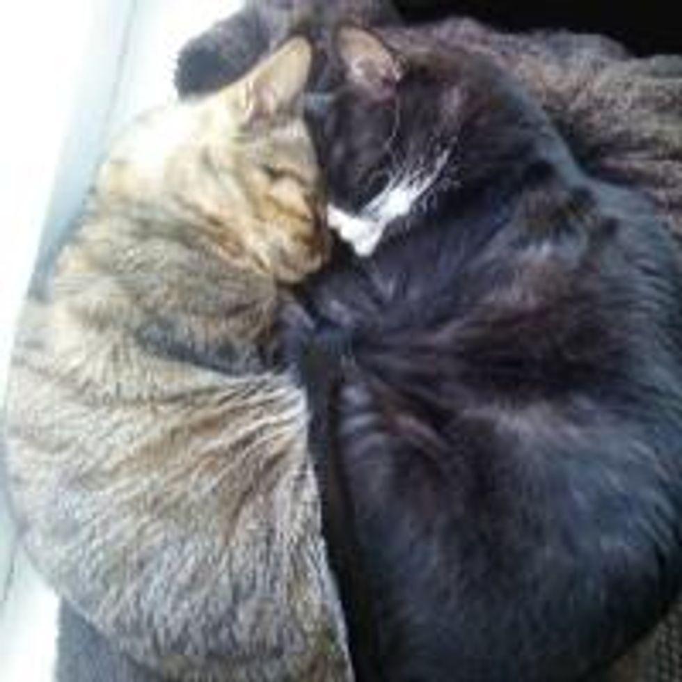 Cat Olympics: Synchronized Sleeping