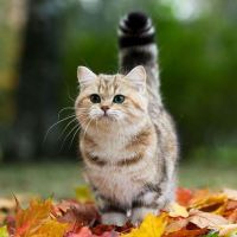 Kitty in a Fall Mood