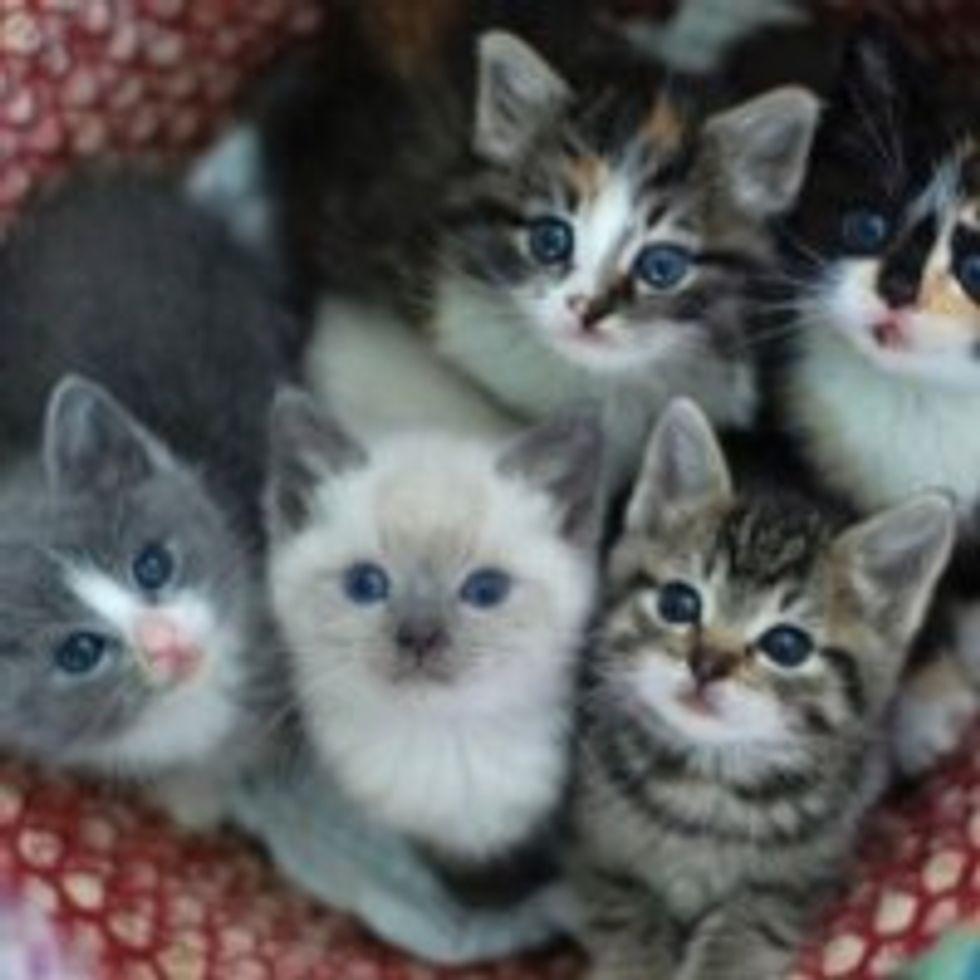 Basket of Itty Bitty Foster Kitties