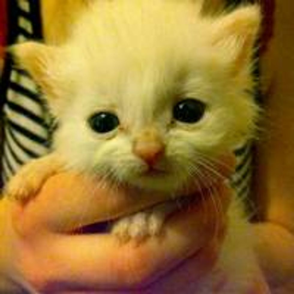 Tiny Rescue Ball of Cute