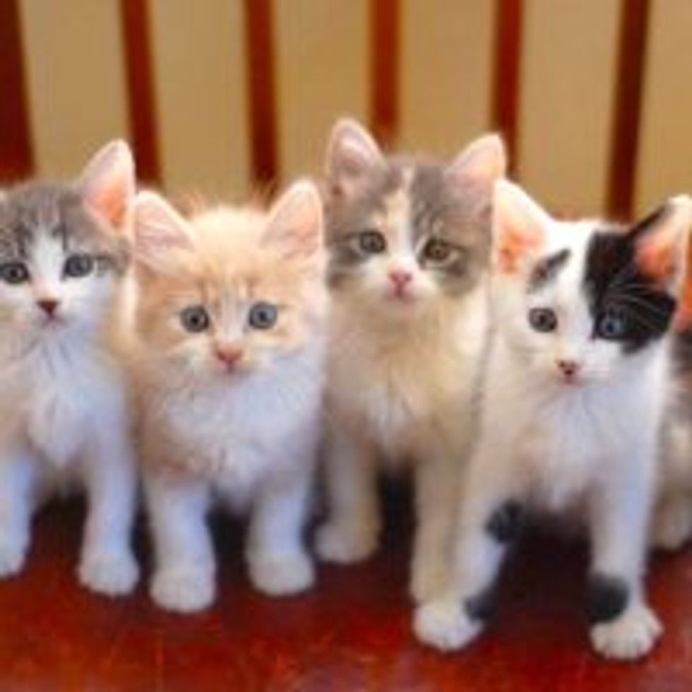 Five Little Furry Purrers