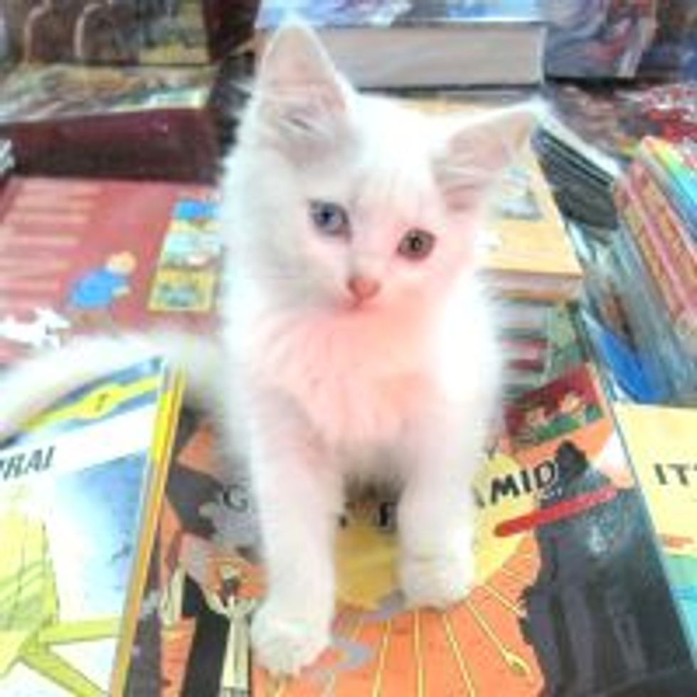 Bookstore Cats from Bangalore