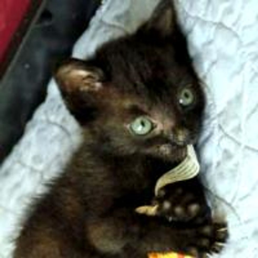 Tony the Runt of a Rescue Litter Perseveres