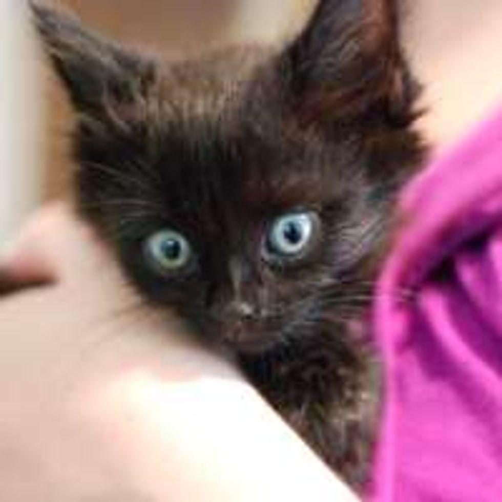 Rescue Black Kitty from Quadriplegic to Moving Again