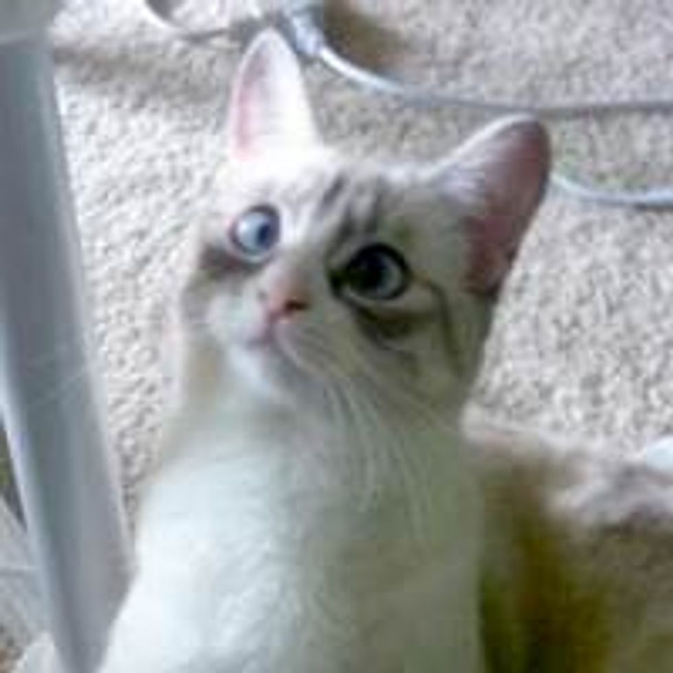 Cross-eyed Cat Strays into Forever Home