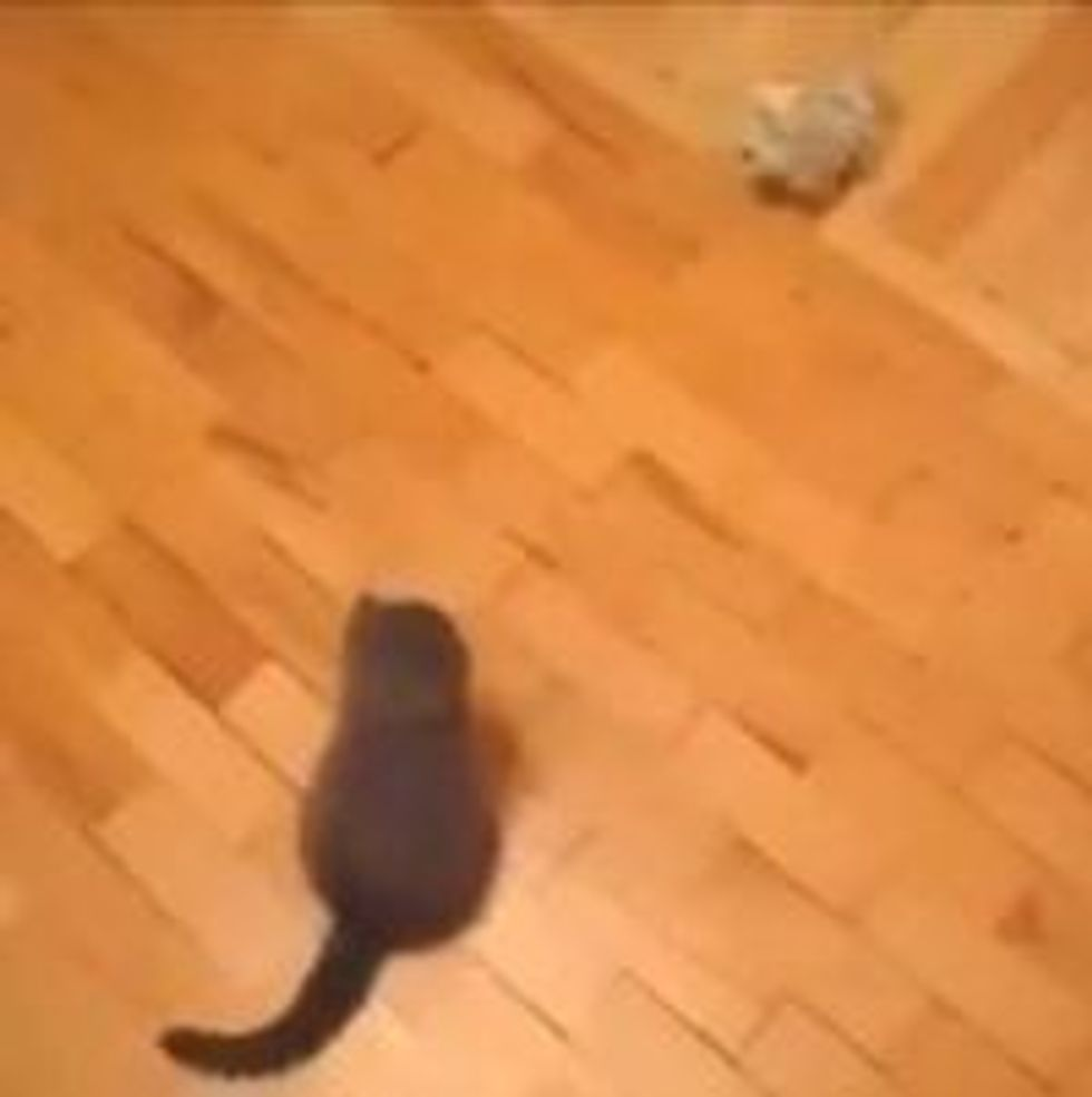 Chuck Norris' Kitten