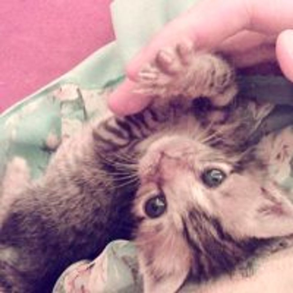 Tiny 10-Day-Old Tabby Kitten Rescued by Dog