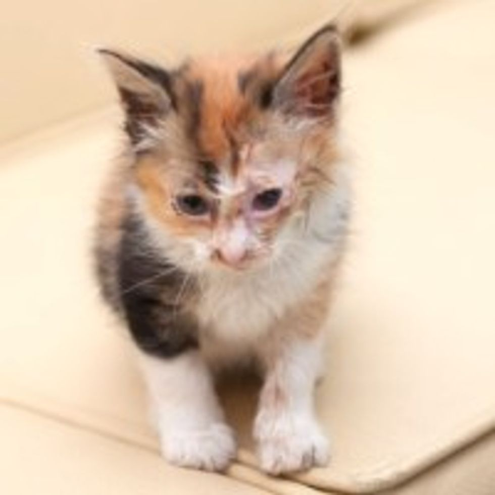 Calico Kitty Saved 8 Months Ago: from Stray to Star