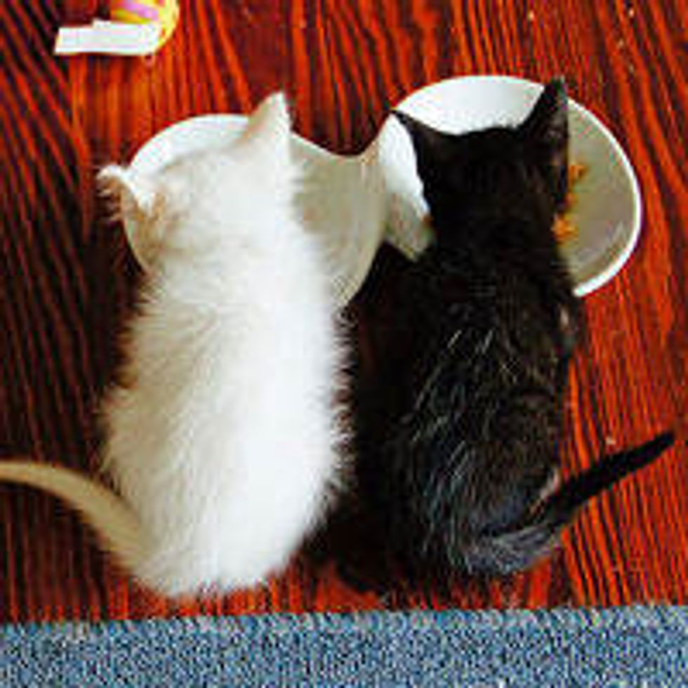 Three Tiny Sister Kitties Get a Second Chance