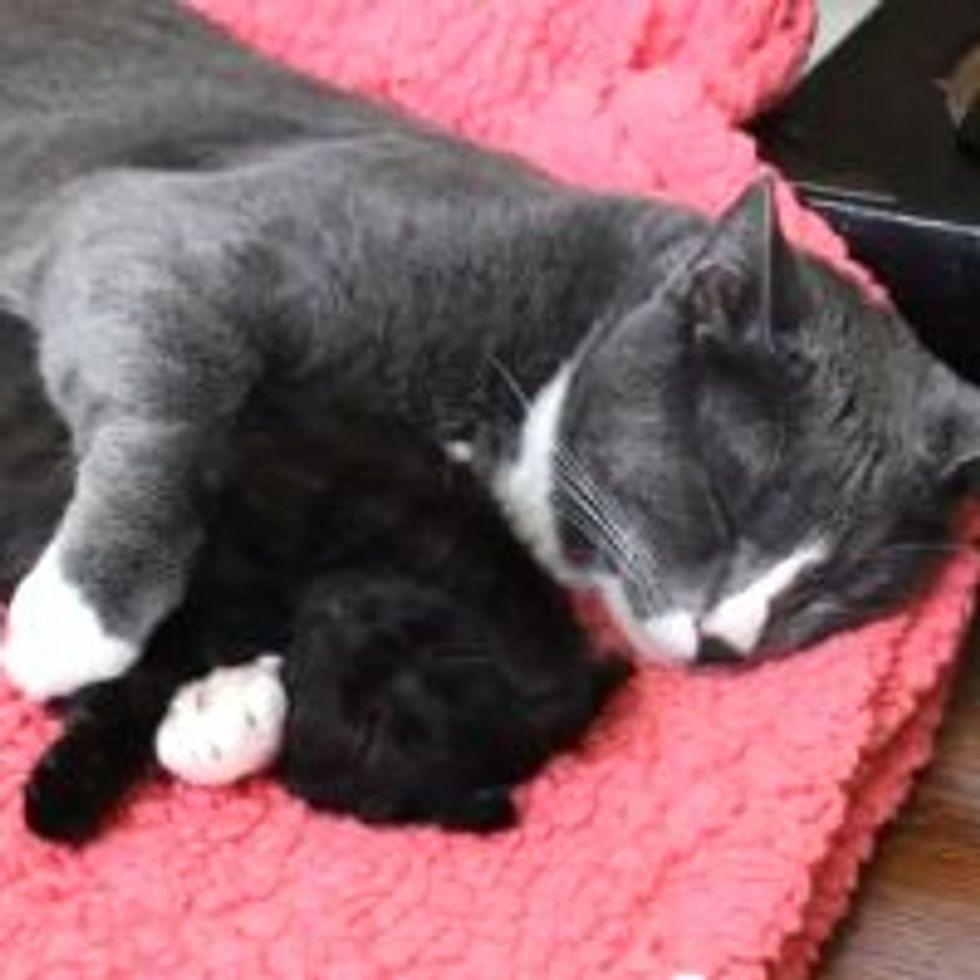 Sleepy Cuddly Buddies