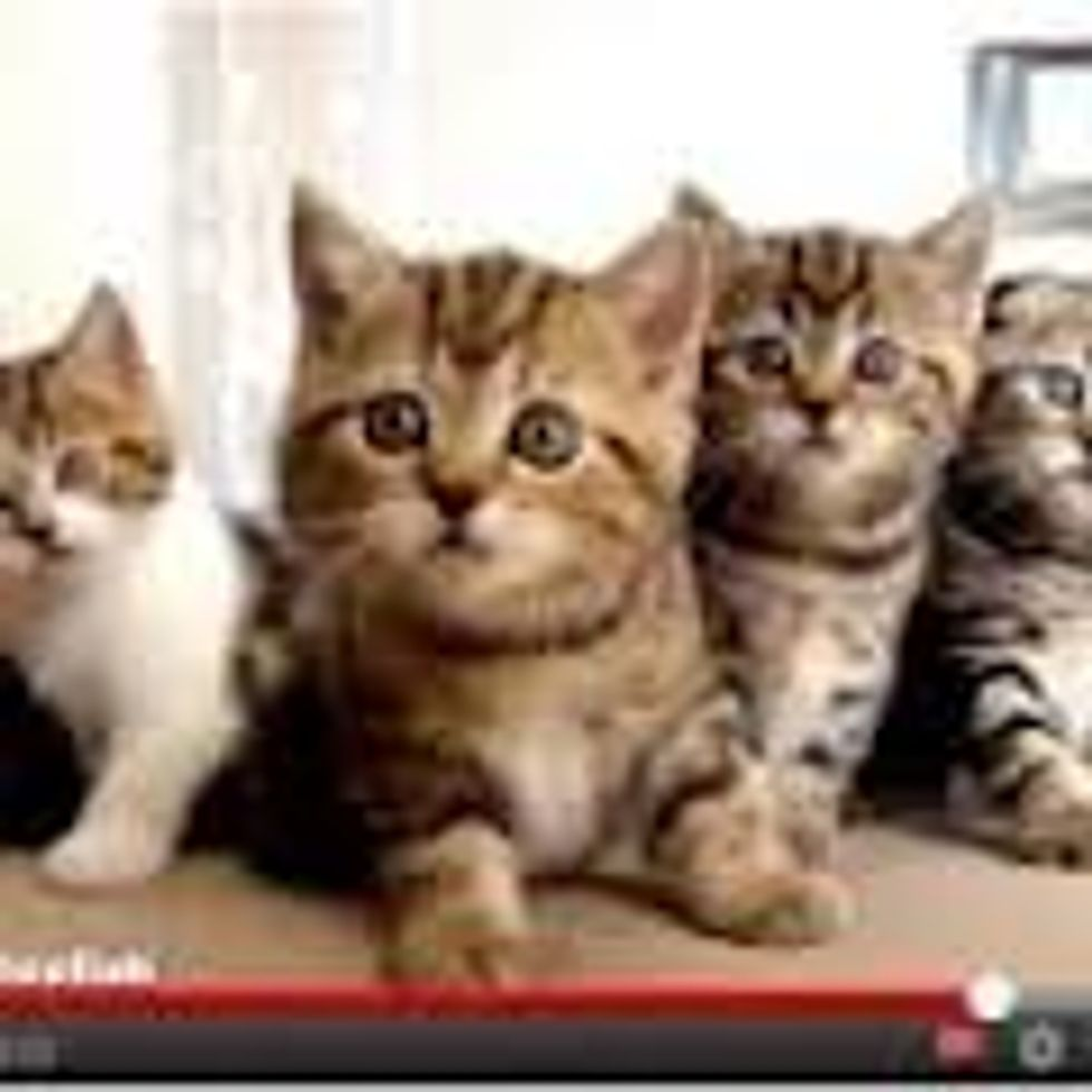 Synchronized Dancing Kitties