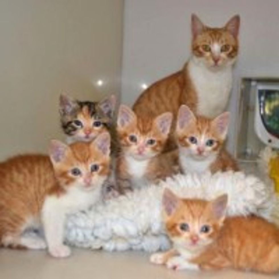 Furry Family of Six Find Hope