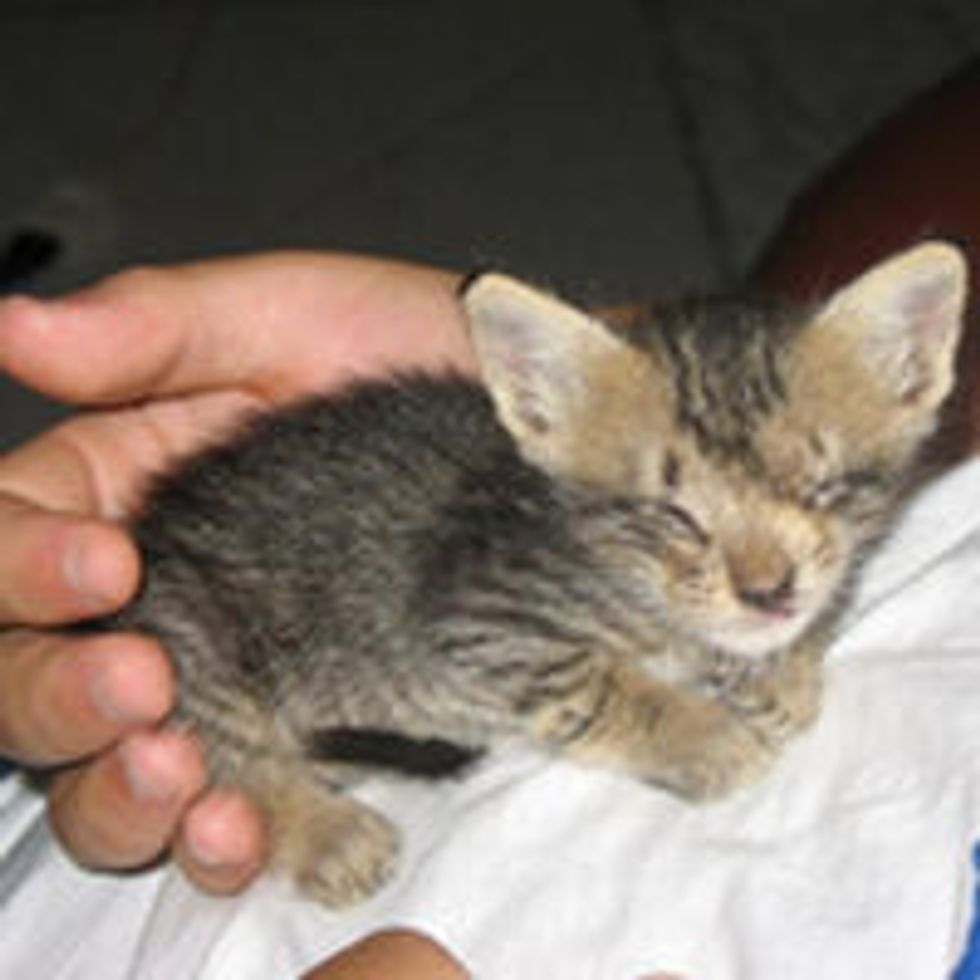 Blind Kitten Rescued by Man Who Never Gave Up on Her