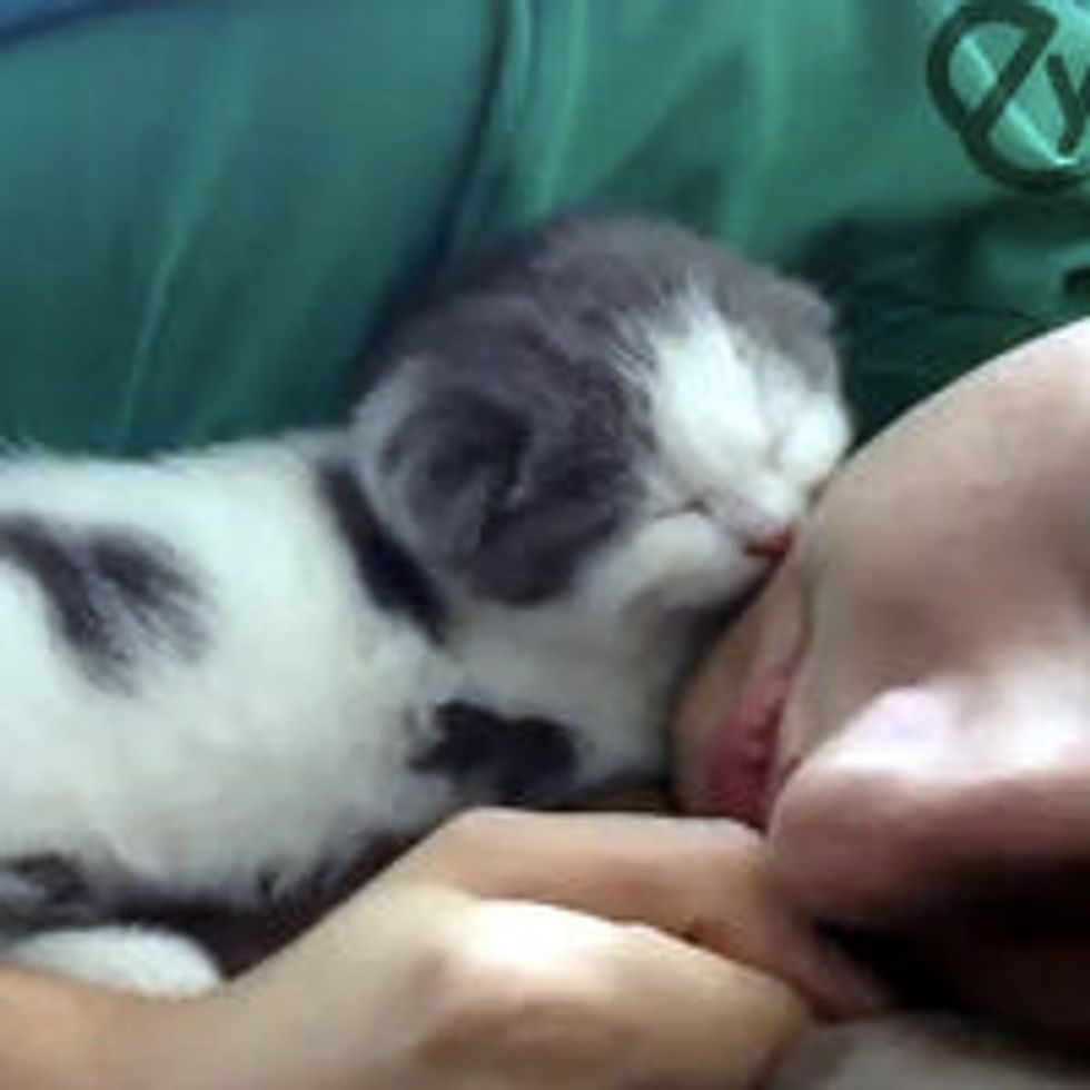 Cute Sleepy Kitty Naps with Human Dad