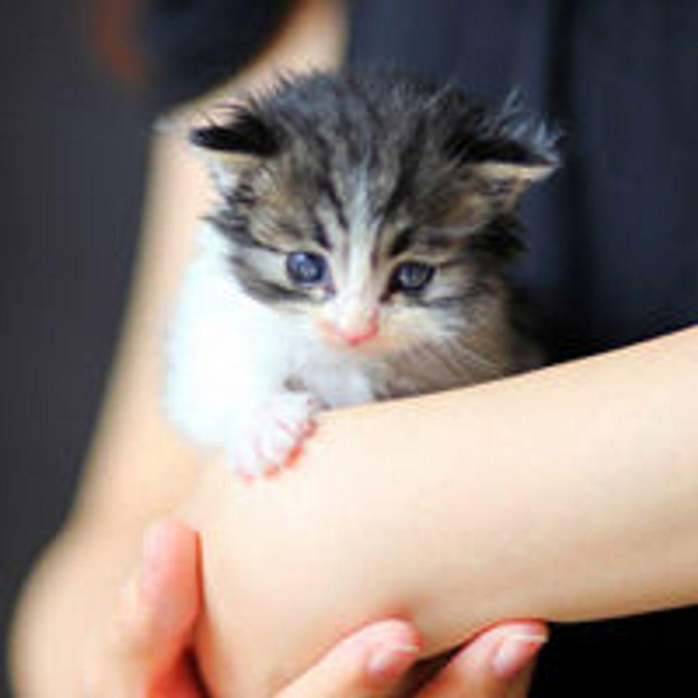 Tiny Roadside Kitten Found in Flowers